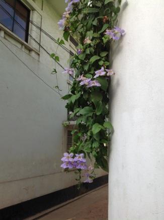 flowersonwall