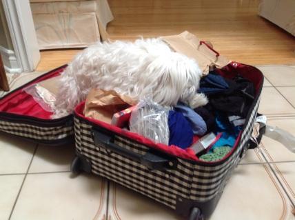 puppyunpacking