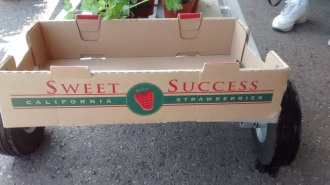 sweetsuccess